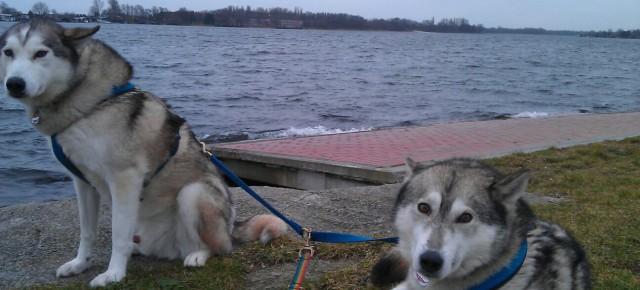 Unterwegs mit den sibirischen Huskies Sally und Trick