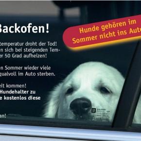 Ein Auto kann für Hunde zur tödlichen Falle werden!