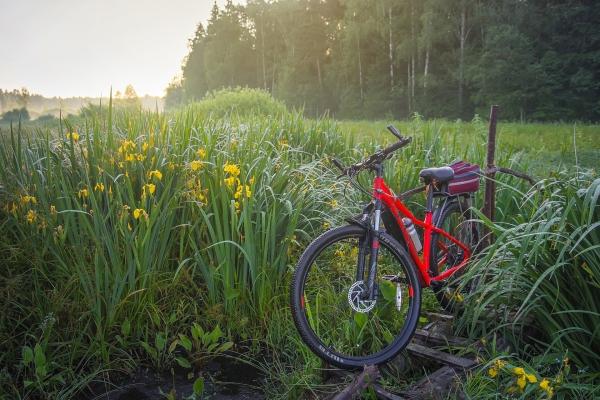 Fahrrad in Wiese