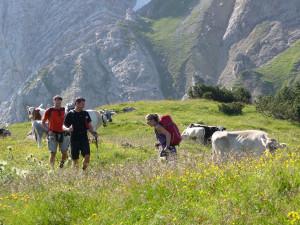 Wiese und Kühe