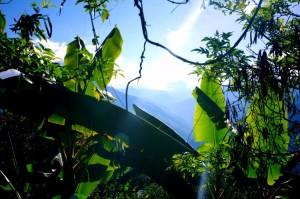 Bananenpalmen in Coroico
