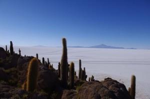 Blick von der Isla de Pez (Fischinsel) in der Salar de Uyuni