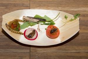 Das Auge isst mit - Insekten - Kostprobe - Bremerhaven