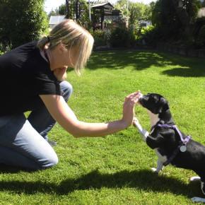 Outdoor-Spaß mit Hund