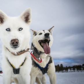 Gewinnt einen winterlichen Traumurlaub in Schweden im Wert von bis zu 869 Euro!