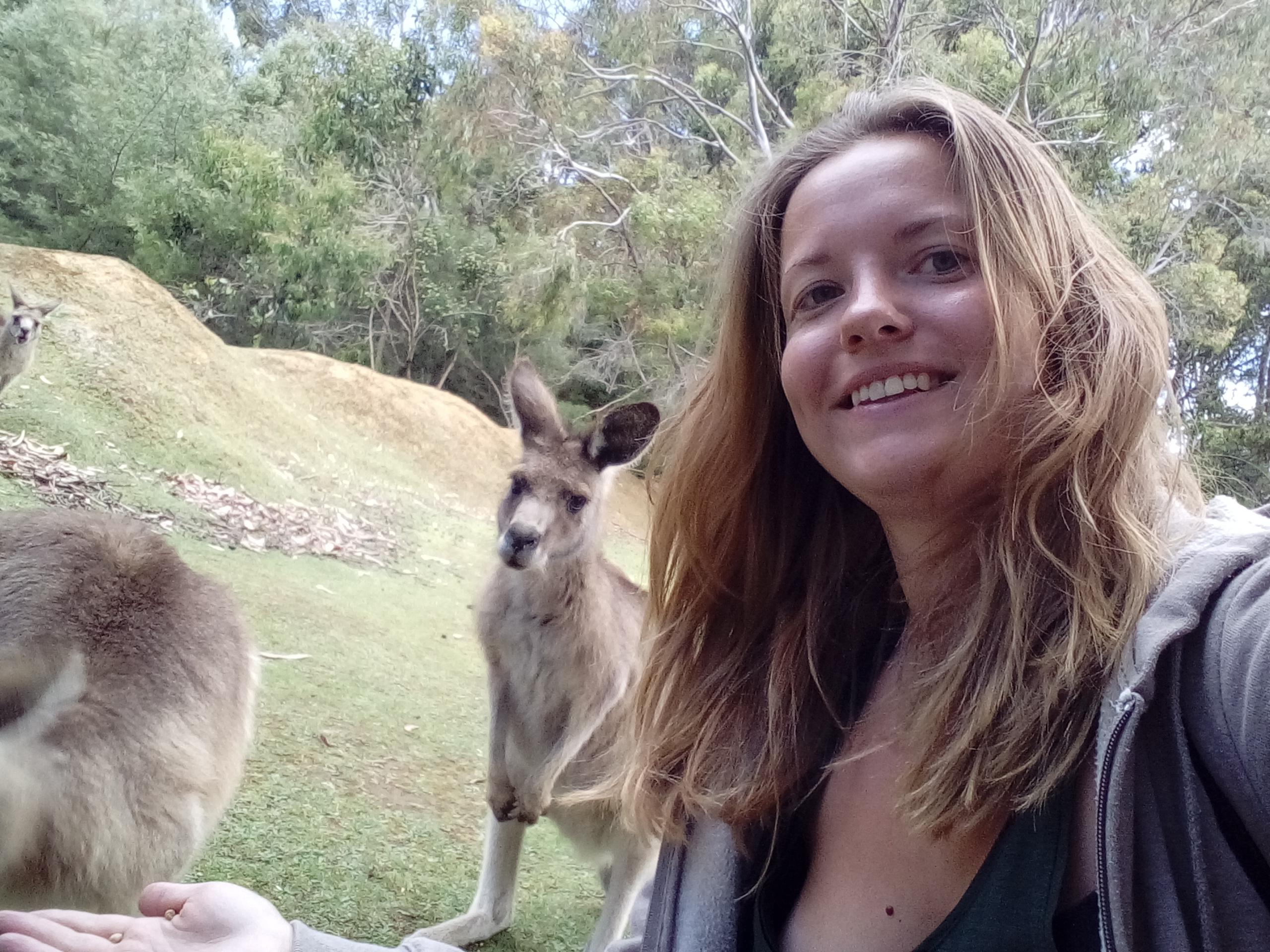 Kängurus in Tasmanien