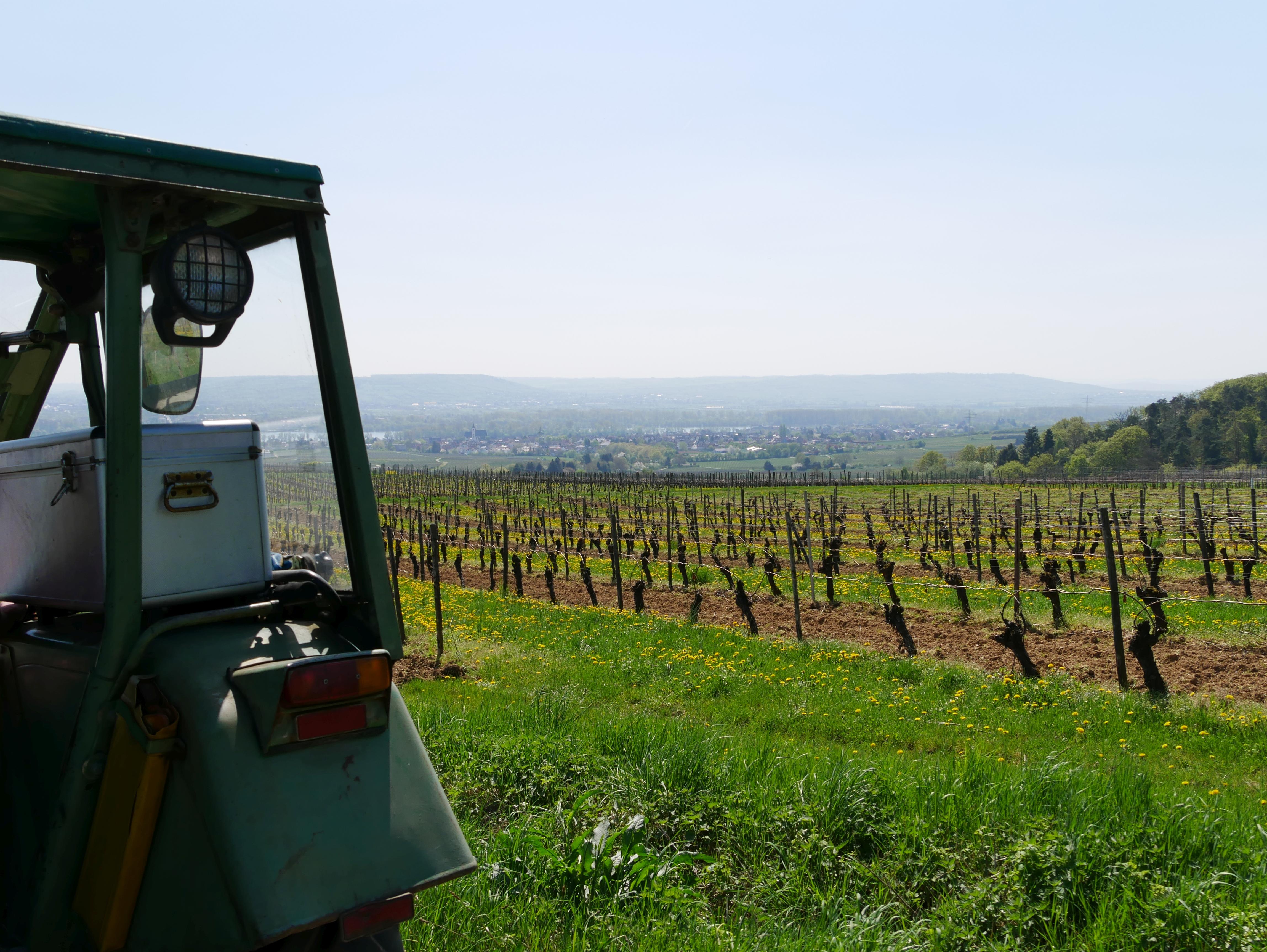Weinverkostung im Rheingau