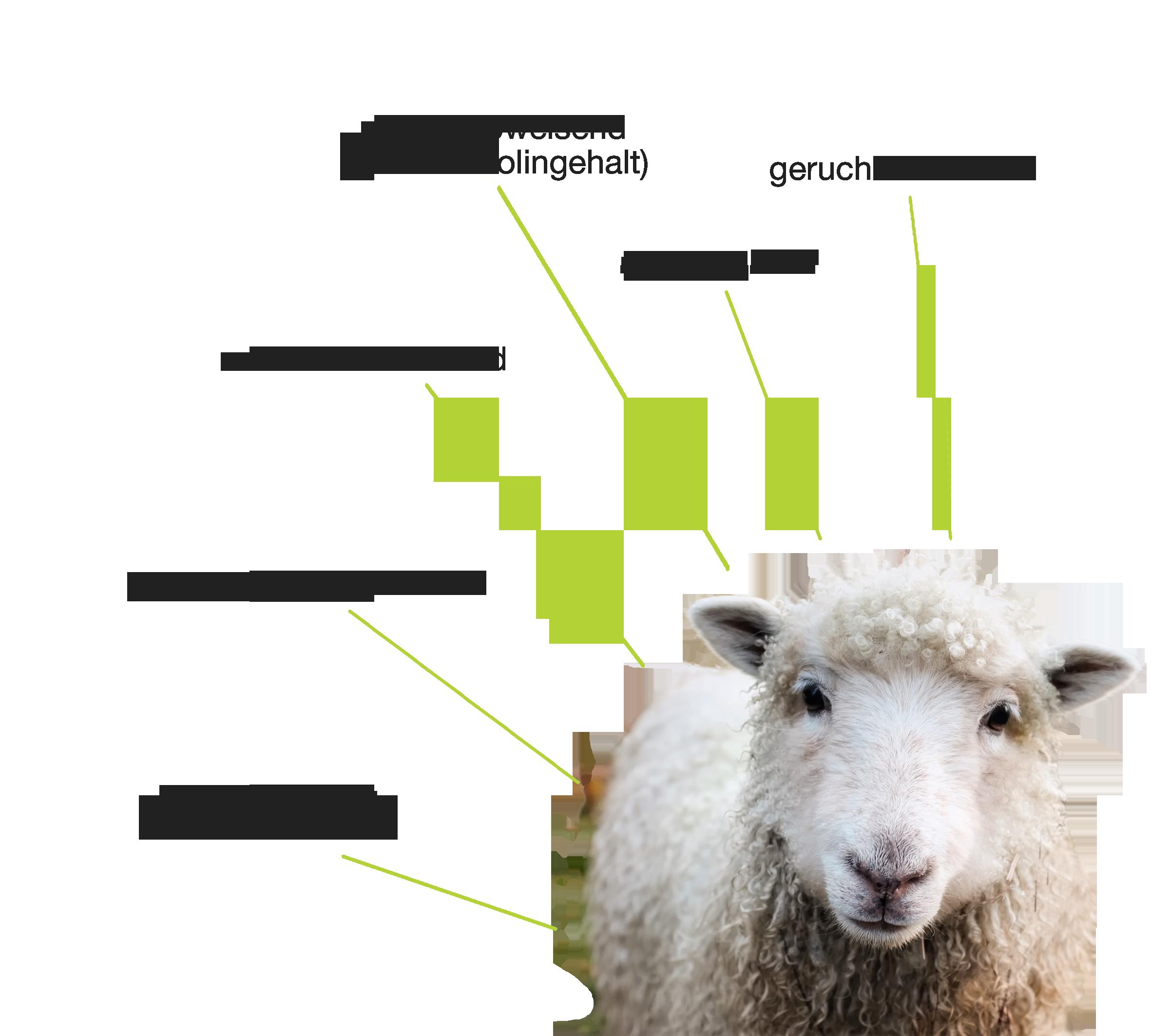 Eigenschaften von Wolle