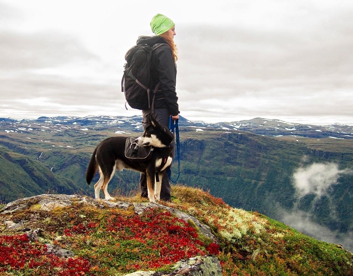 Hund Gipfel b