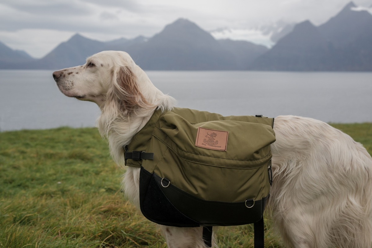 Hund Backpack