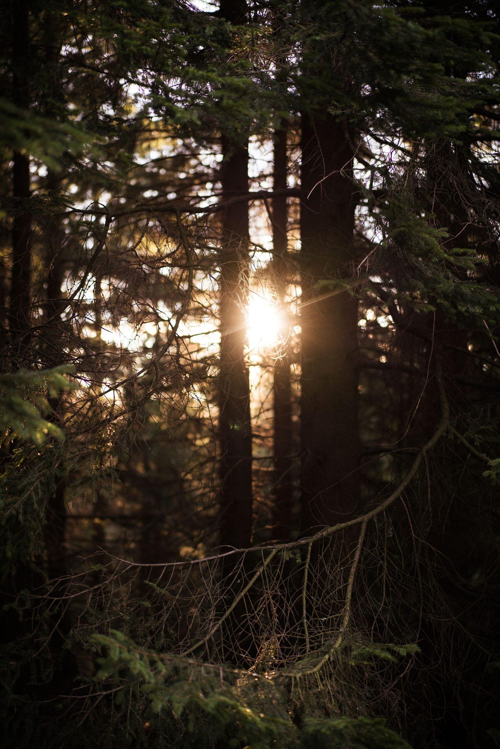 Sonnenaufgang im Nationalpark Harz