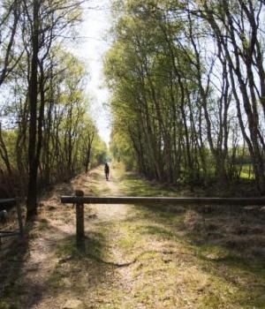 Wanderweg Wald