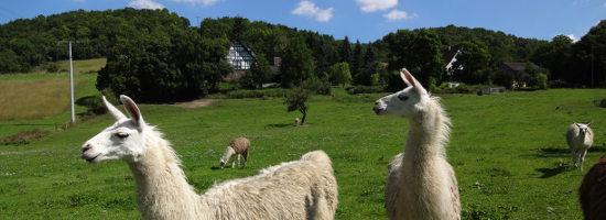 Singlebörse Steiermark Kostenlos